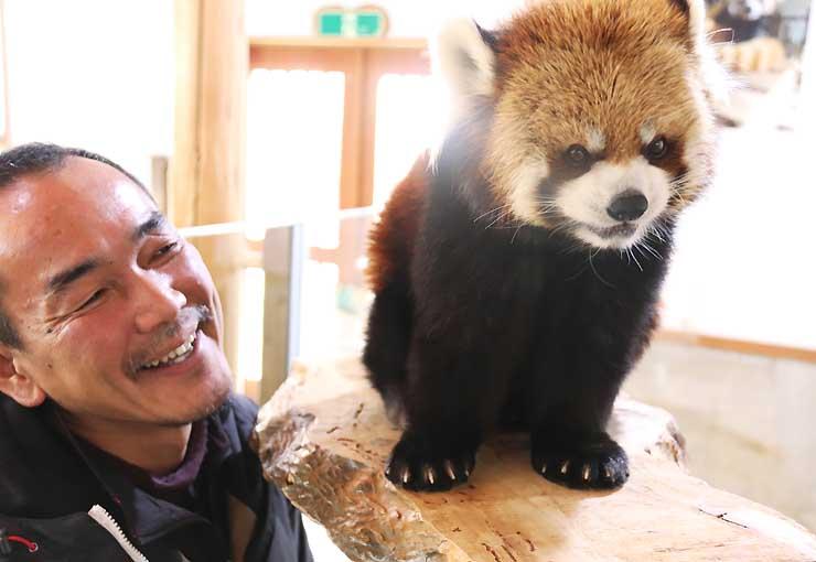 レッサーパンダ「ロン」を見つめる田中さん