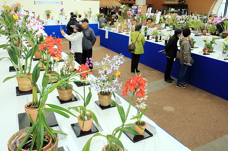 華やかなランが並ぶ会場=県中央植物園