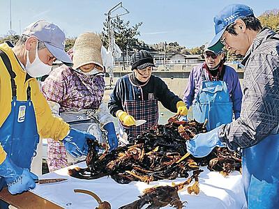 養殖ワカメの出荷始まる 七尾・大泊町、能越道PAで販売