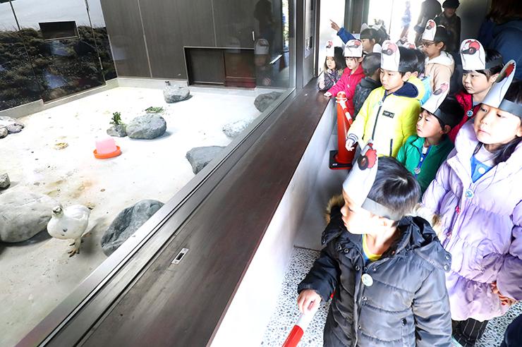 展示公開が始まったニホンライチョウを見る園児=富山市ファミリーパーク
