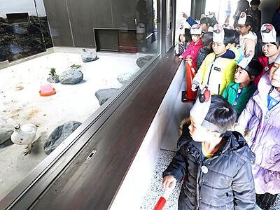 ニホンライチョウ2羽一般公開 富山市ファミリーパーク