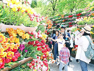 「花の大谷」協賛いかが 砺波市花と緑の財団