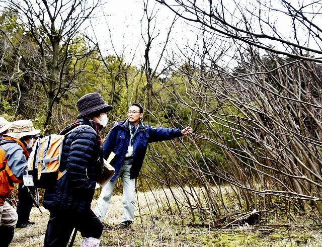 福井県高浜町職員(右)から薬用植物ゴシュユについて説明を受ける参加者=3月13日、同町山中
