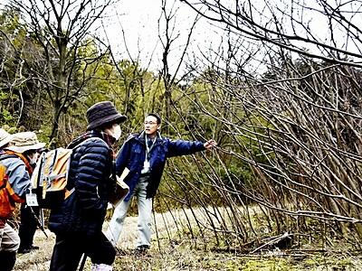 薬用植物ゴシュユ群生地を見学 福井県高浜町の青葉山
