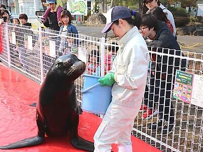 アシカ、目の前の専用通路で訓練 長野の城山動物園