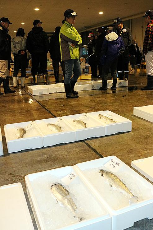 競りにかけられる海上養殖と陸上養殖の「いみずサクラマス」=新湊漁港