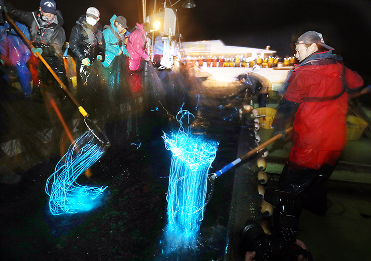 観光船の乗船客が眺める中、網にかかり青白い光を放つホタルイカ=19日午前4時ごろ、滑川沖