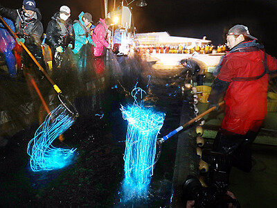 滑川・ほたるいか海上観光で試乗会 21日開始