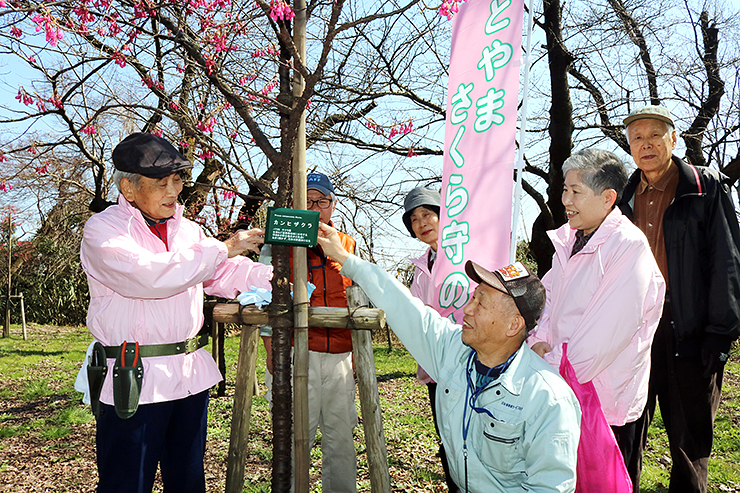 取り付けた銘板を見る「高岡古城公園さくらプロジェクト」チームのメンバーら