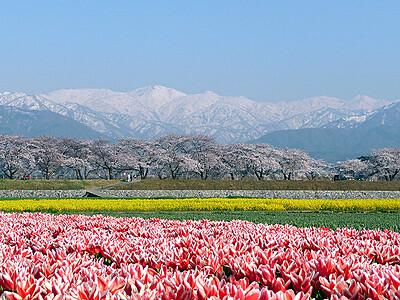 一望なるか「春の四重奏」 暖冬影響、開花重なる期待大 朝日