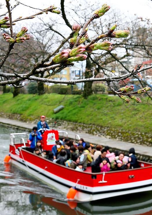 今シーズンの運航が始まった遊覧船。川べりの桜並木の中には今にも咲きそうにつぼみが膨らんだ枝もあった=松川