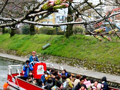 松川遊覧船の運航開始 富山の春の風物詩