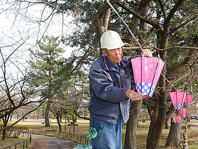 魚津総合公園にぼんぼり350個 桜開花に合わせ点灯
