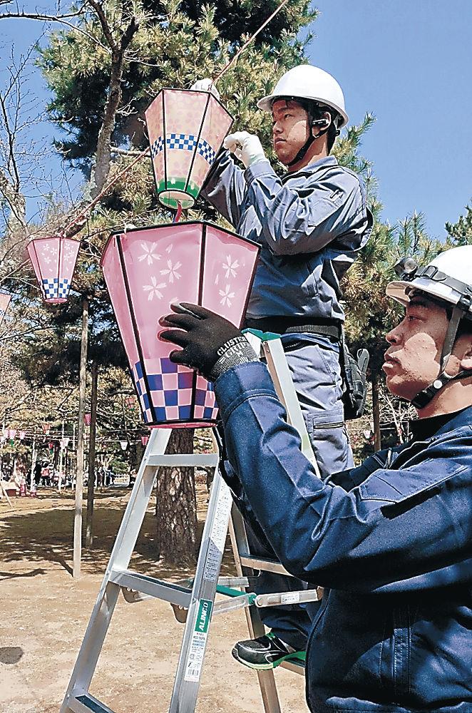 着々と進められる花見用ぼんぼりの設置作業=小松市芦城公園
