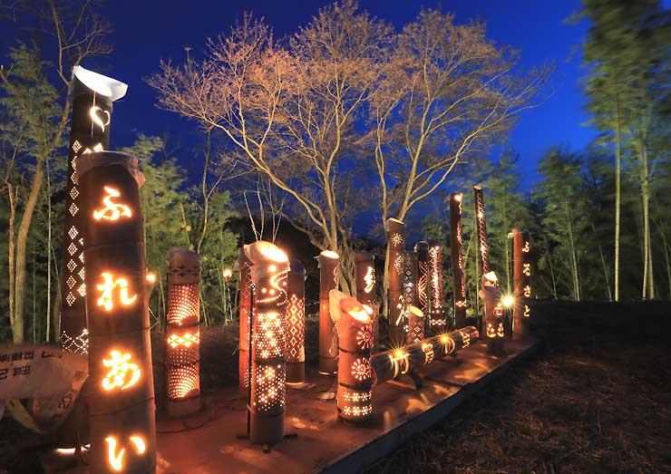 竹灯籠とスポットライトで浮かび上がる「しあわせ桜」
