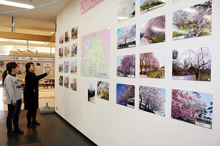 エールのイベントスペースで展示している「桜の名所@滑川」