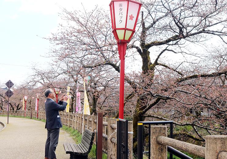 桜を眺める来場者
