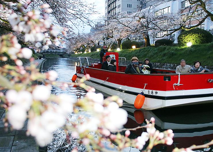 船上からライトアップされた桜を楽しむ参加者