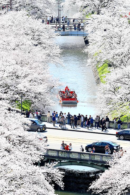 満開の桜が縁取る松川べり。大勢の人が花見を楽しんだ=富山市東田地方町のビル屋上から