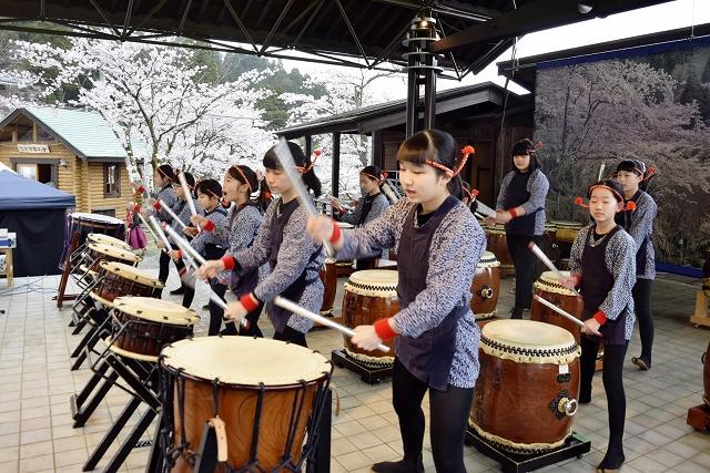 満開の桜の下で演奏し、まつりの幕開けを飾った「はながたみ子供太鼓」=4月7日、福井県越前市の花筐公園