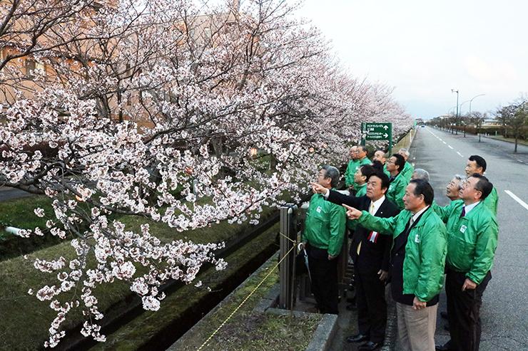 ぼんぼりがともった桜並木を見つめる関係者