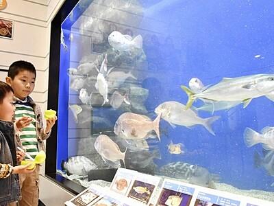 県海浜自然センター(若狭町)入館者13万人突破
