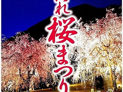 幻想しだれ桜見て 福井・坂井市竹田地区で13日から