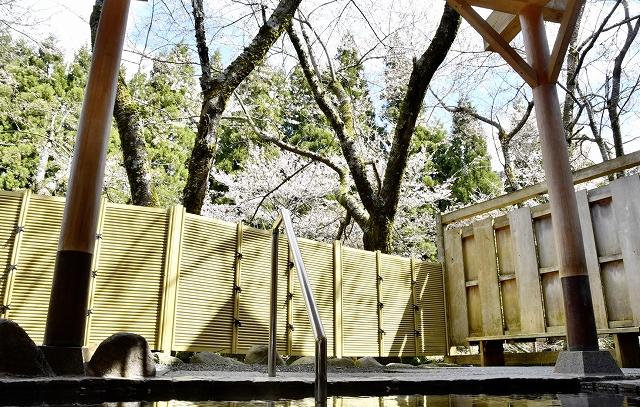 露天風呂から眺められる桜=4月11日、福井県池田町志津原の「冠荘」