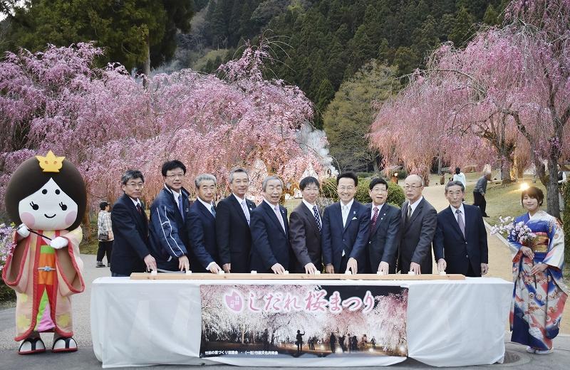 しだれ桜ライトアップの点灯式=4月13日、福井県坂井市丸岡町山竹田のたけくらべ広場