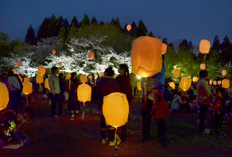 ライトアップされた桜の中、夜空に放たれるスカイランタン=4月13日夜、福井県越前町の越前陶芸村