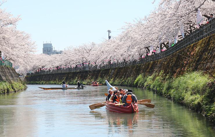 川を下りながら桜並木を楽しむ参加者=千保川