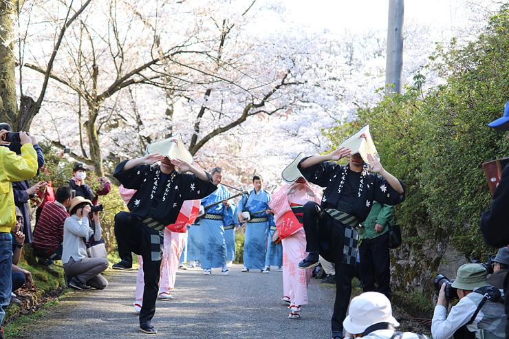 桜並木の下で踊る県民謡越中八尾おわら保存会のメンバー