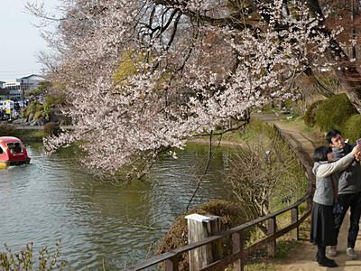 臥竜公園の桜開花宣言