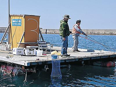 輪島のイカダ釣り シーズン始まる