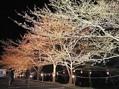 夜の史跡に輝く桜 相川・佐渡金山ライトアップ