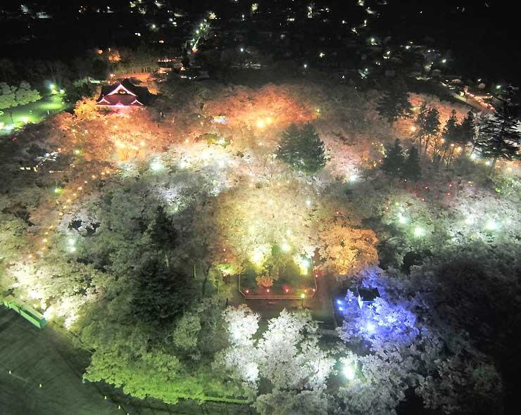 ライトアップされた高遠城址公園の桜=17日、伊那市