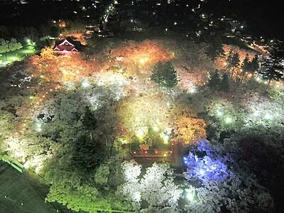 夜に染まる、満開の高遠 「門外不出」の桜照らす