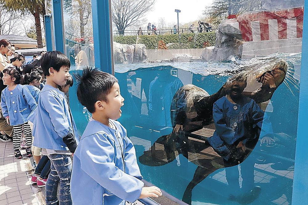 アシカやアザラシに見入る園児=能美市のいしかわ動物園