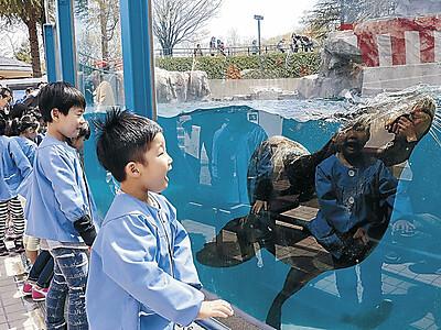 目の前にアシカ、アザラシ いしかわ動物園、展示施設を改修