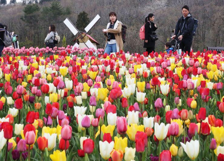 色とりどりの花を咲かせたチューリップ=21日、長岡市の国営越後丘陵公園