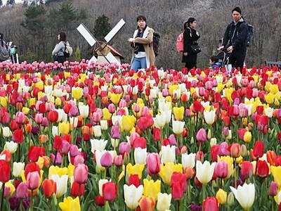 笑顔咲く色彩の競演 長岡・丘陵公園
