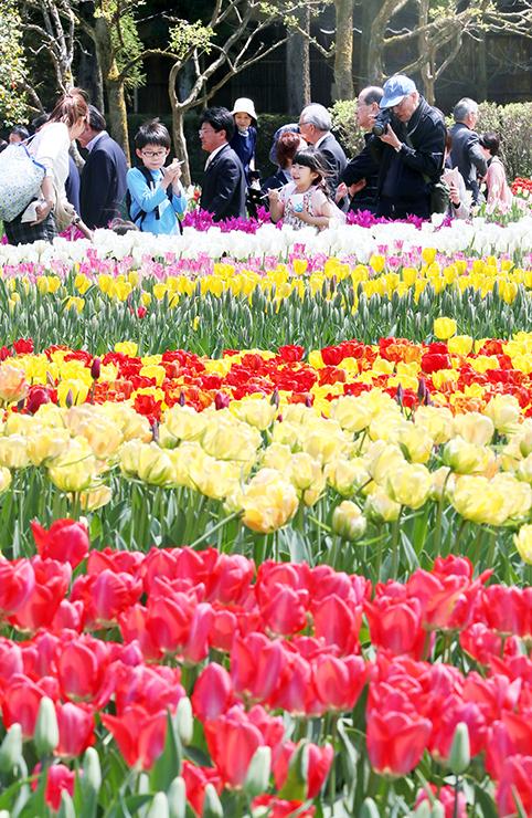 色とりどりの花を楽しむ来場者=砺波チューリップ公園