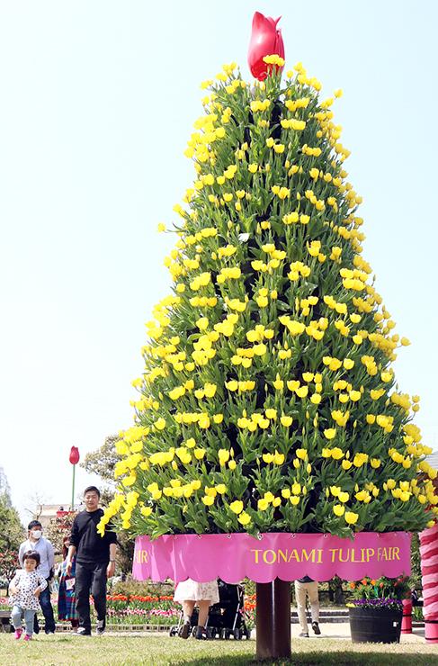 黄小町1700本で造ったツリー。左奥はチューリップタワー=砺波チューリップ公園