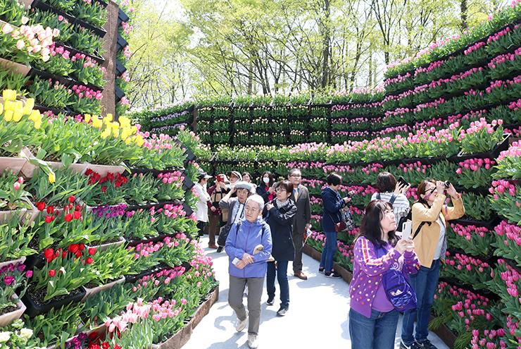 花の大谷を散策する観光客