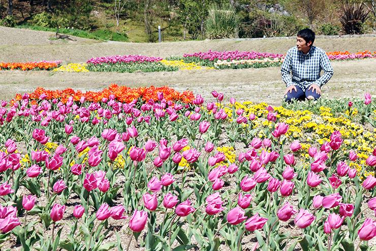 チューリップやパンジーなど春の花が咲いた園内
