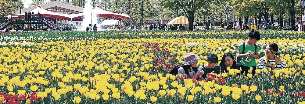 春を彩るチューリップを満喫する来場者=砺波市の砺波チューリップ公園