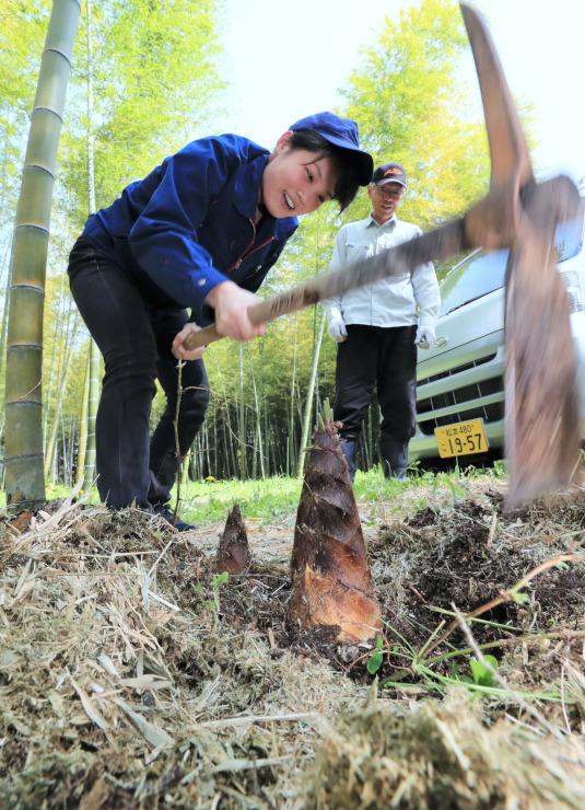 タケノコ狩りが始まる経竹園