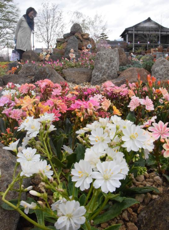 「停車場ガーデン」を彩る色鮮やかな花