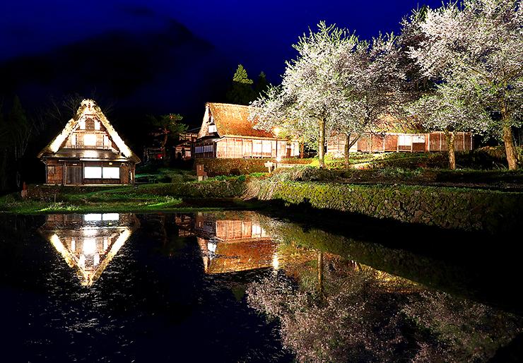ライトアップされ、水を張った田に映る合掌造り家屋と桜=南砺市相倉