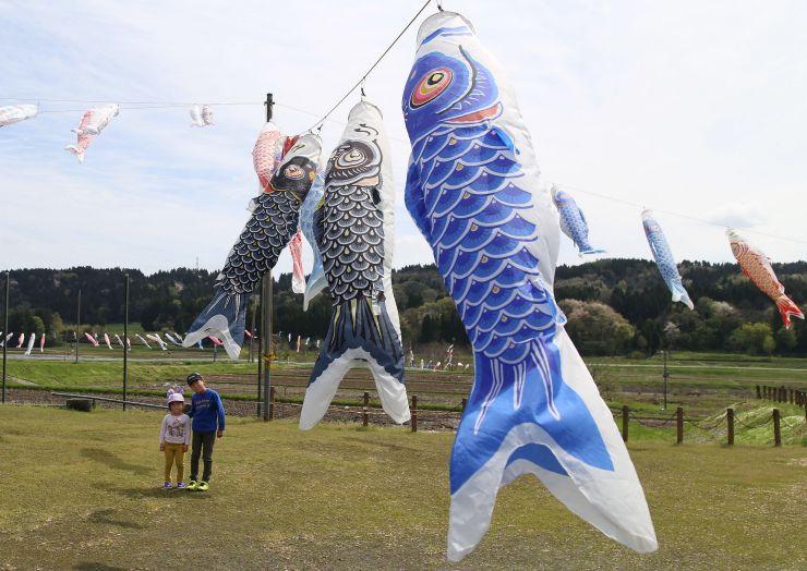 大空にはためくこいのぼり=長岡市岩田の岩田農村公園